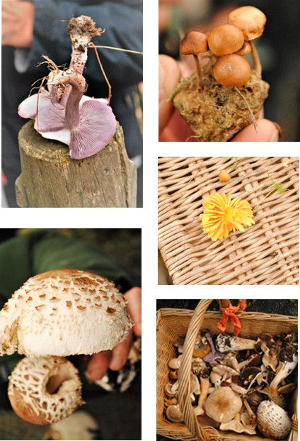 A selection of the specimens found during the Fungi Foray