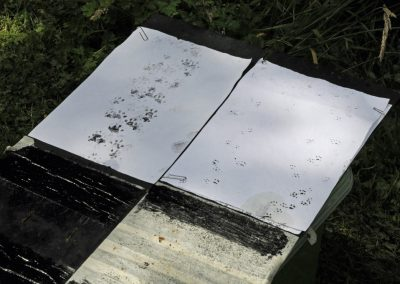 Mammal tracks from hedgehog tunnels