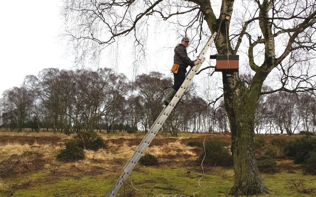 Installing Kestrel Nest Box Catherton Common